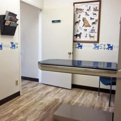 exam room. pictured is an exam table, on wall is dog pictures