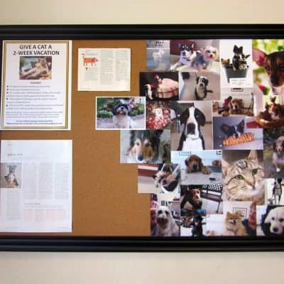poster board in office. with news articles tacked up as well as pictures of dog and cat clients